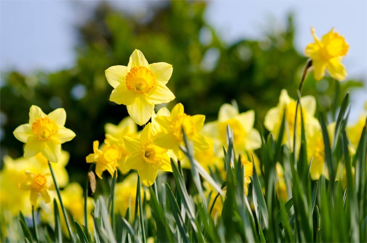 Happy St. David's Day!